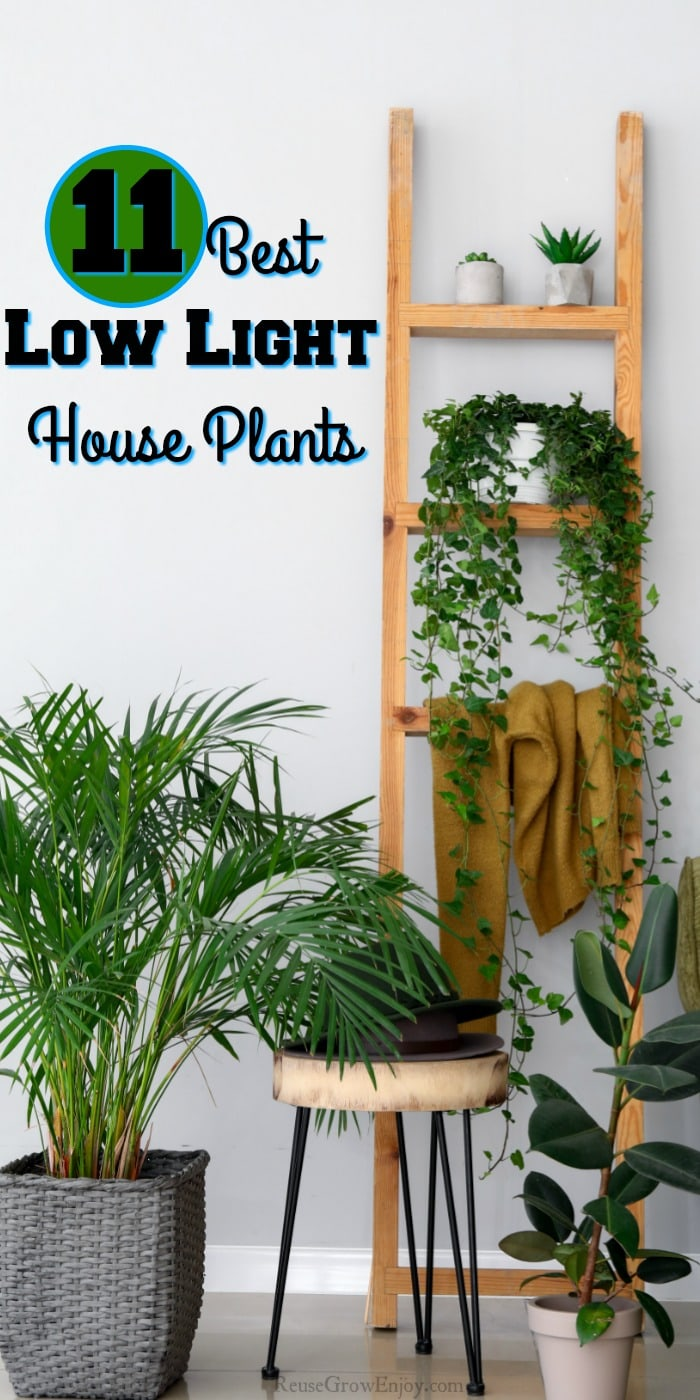 Room with wood ladder with house plants. Edge of chair to right with more plants on the floor. Text overlay saying 11 Best Low Light House Plants