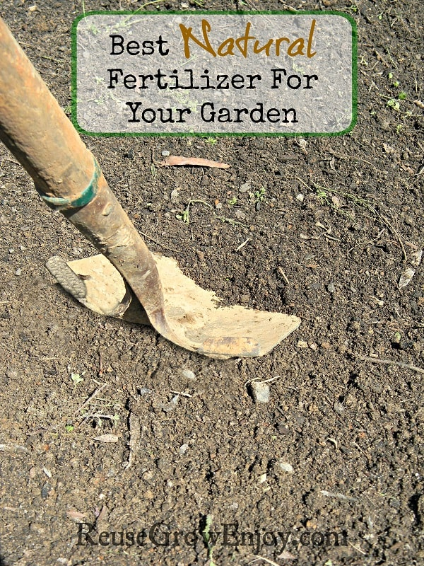 Best Natural Fertilizer For Your Garden