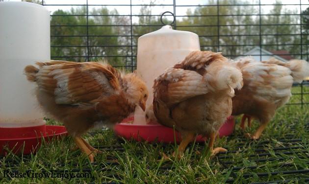 Watch The Chicks
