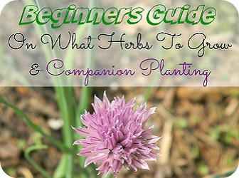 Beginners Guide On What Herbs To Grow And Companion Planting Sidebar