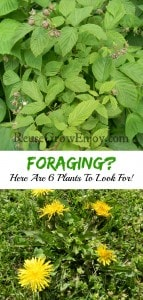 Foraging? Here Are 6 Plants To Look For