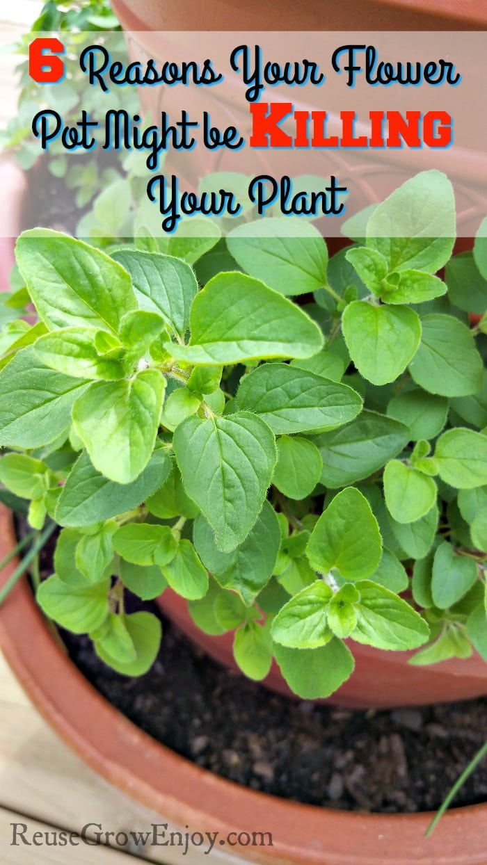 Do you grow in flower pots? If you have issues with your plants dying, check out these 6 Reasons Your Flower Pot Might be Killing Your Plant!