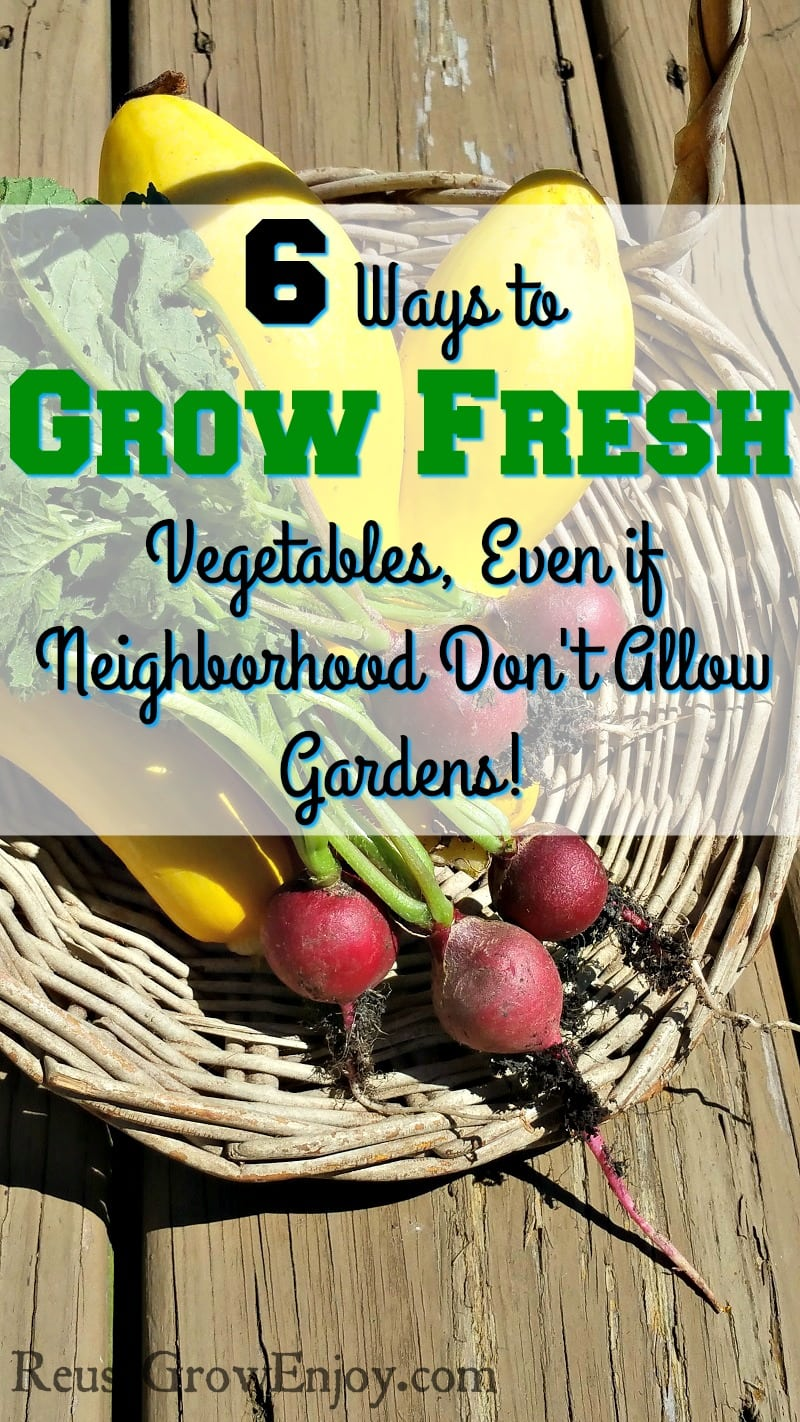 Thinking you want to grow fresh vegetables but gardens are not allowed in your area? Check out these 6 Ways to Grow Fresh Vegetables Even if Your Neighborhood Association Doesn't Allow Gardens!