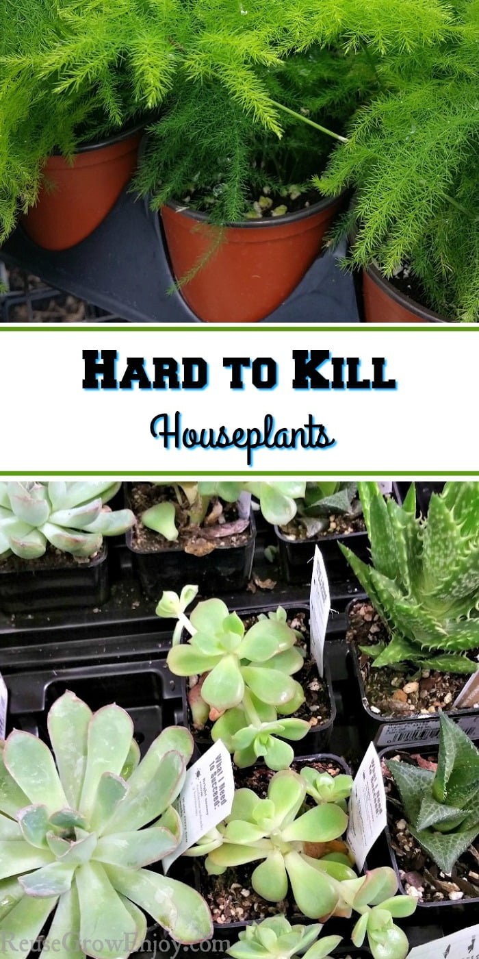 Are you someone that is not great at growing things but what to freshen up the house with a few plants? You may want to check out these 7 Hard to Kill Houseplants!
