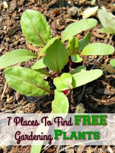 7 Places To Find FREE Gardening Plants