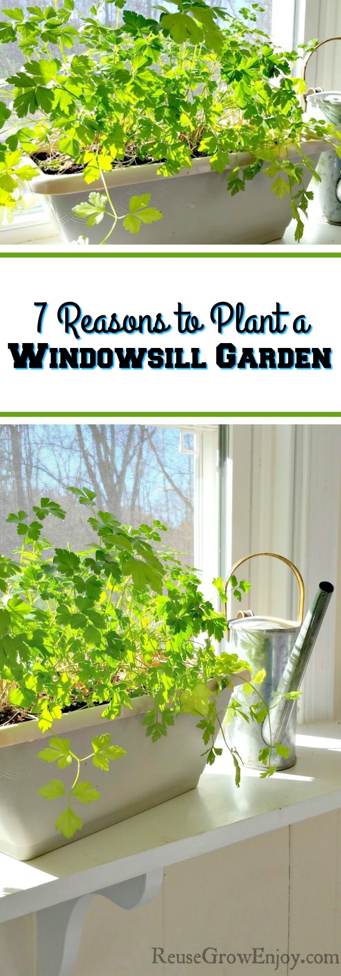 Think you don't have the time or space for a garden? Windowsill garden is the perfect solution to both of those growing issues! I am going to share 7 Reasons to Plant a Windowsill Garden!