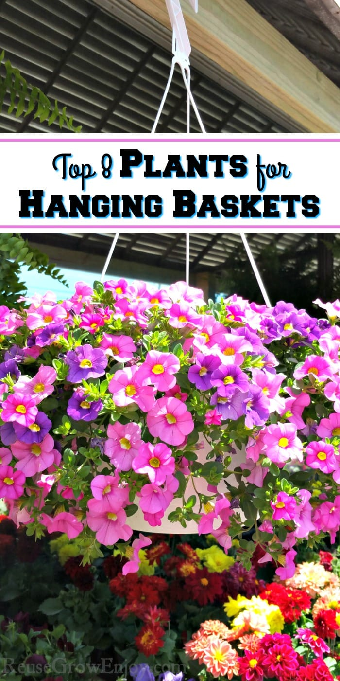 Large hanging basket with purple and pink flowers. Text overlay that says Top 8 Plans for Hanging Baskets
