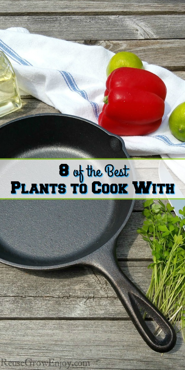 Want to grow a few plants but not sure what to grow? Why not grow something you can also cook with? Check out 8 of the Best Plants to Cook With.