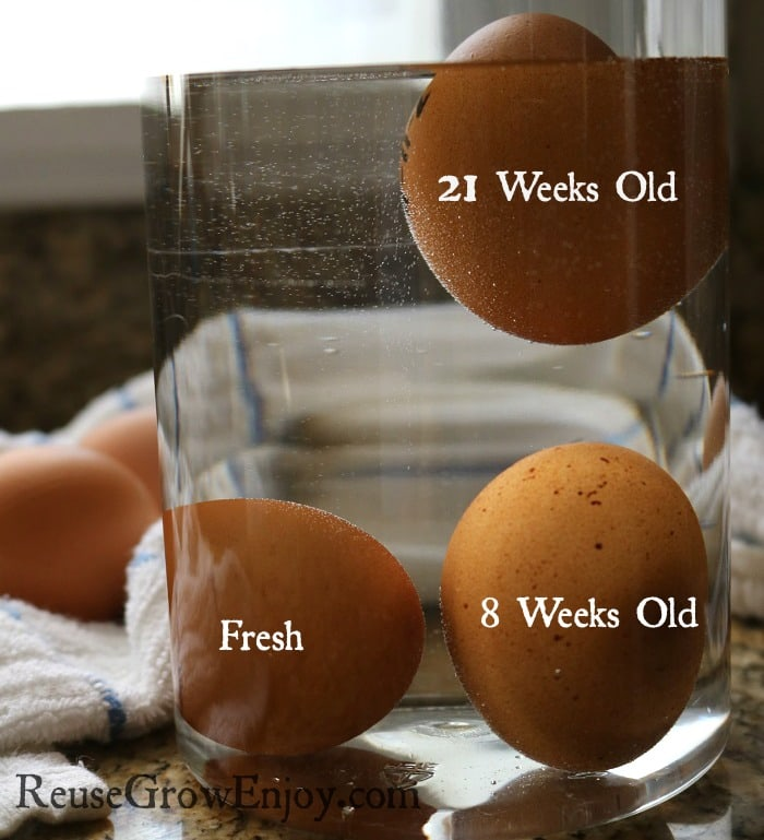 age-of-eggs