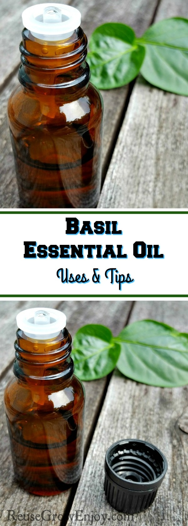 Wanting to learn a little about Basil Essential Oil? I will teach you what Basil Essential Oil is and what it is good for!