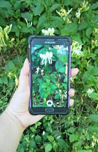 7 Apps to Help You Identify Plants