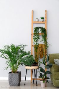 Room with wood ladder with house plants. Edge of chair to right with more plants on the floor.