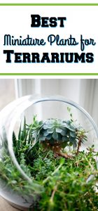 Best Miniature Plants for Terrariums