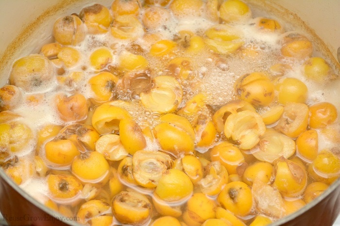 Boiling Loquat Fruit in large pot.