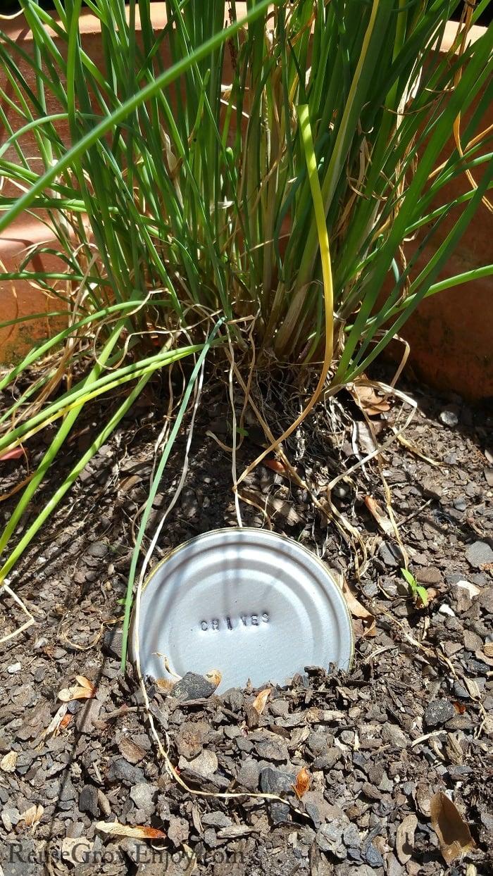 Chives garden marker