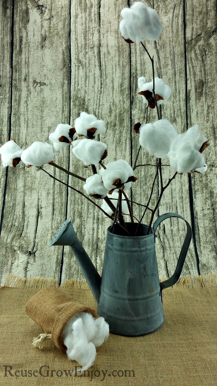 Did you know that making your own farmhouse style cotton stem is super easy and cheap? Click over and I will show you how to make this DIY cotton stem!