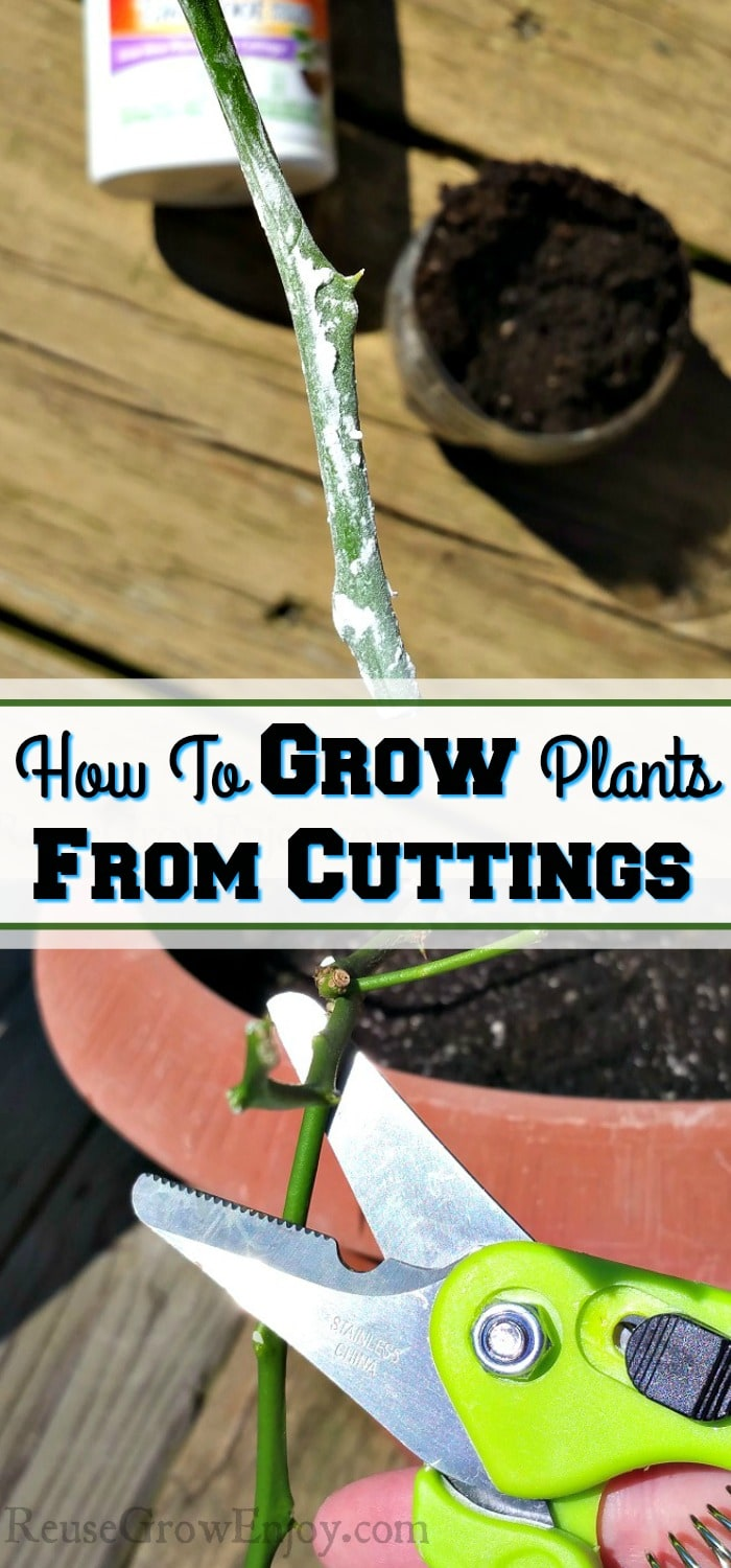 "Bottom is cutting being snipped from plant. Top is cutting dipped in growth hormone. Middle is a text overlay that says ""How To Grow Plants From Cuttings""."