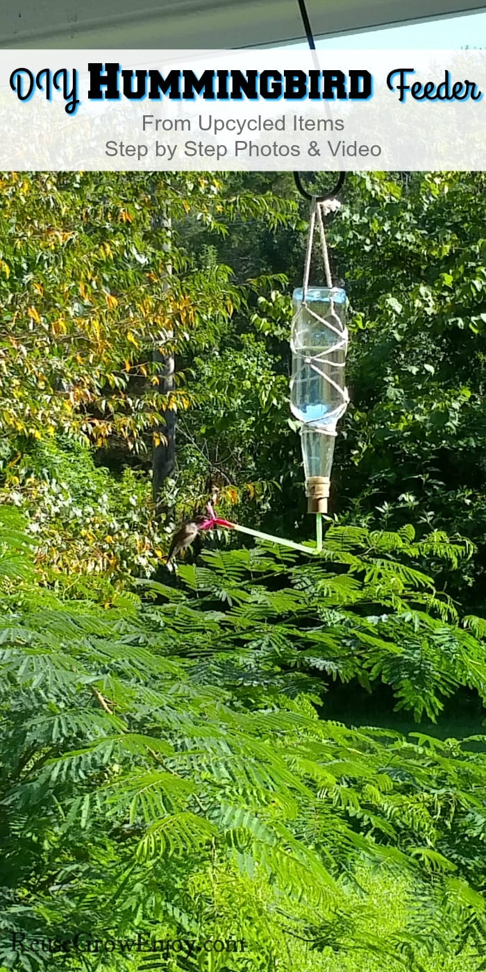 """Hummingbird eating from feeder with text overlay at the top that says """"DIY Hummingbird Feeder"""""""