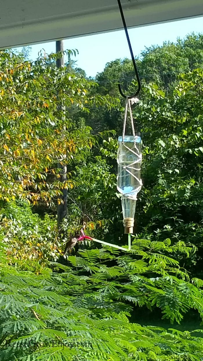 Hummingbird eating from homemade humming bird feeder