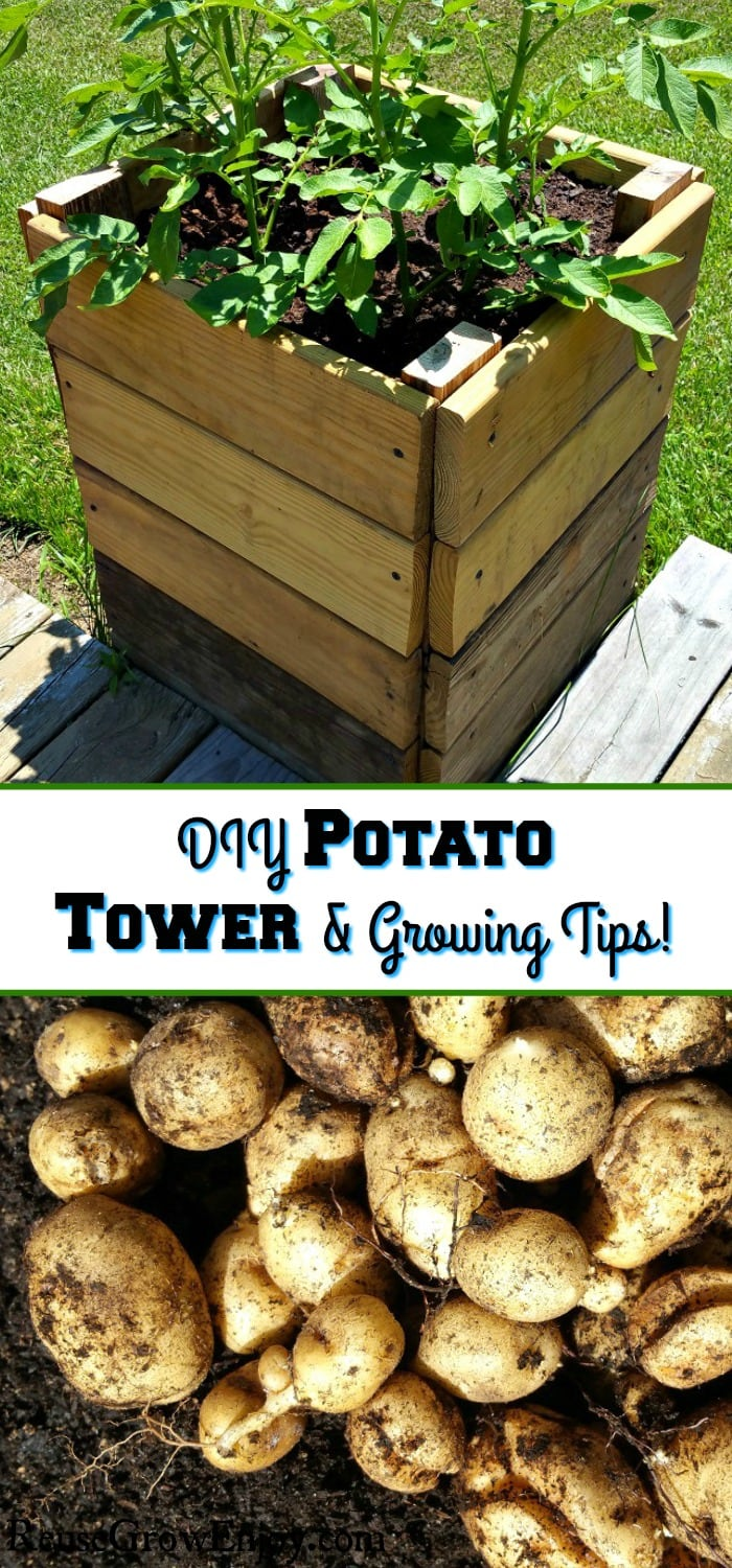 "Potato tower with plants growing at the top and fresh potatoes laying in dirt at the bottom. The middle has a text overlay that says ""DIY Potato Tower & Growing Tips""."