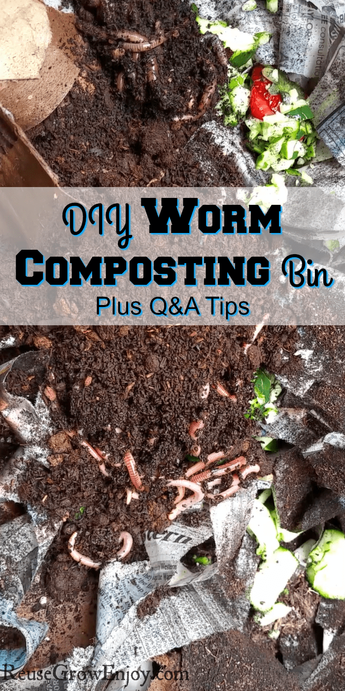 Worm compost bin with dirt, scraps and worms. Text overly in the middle.