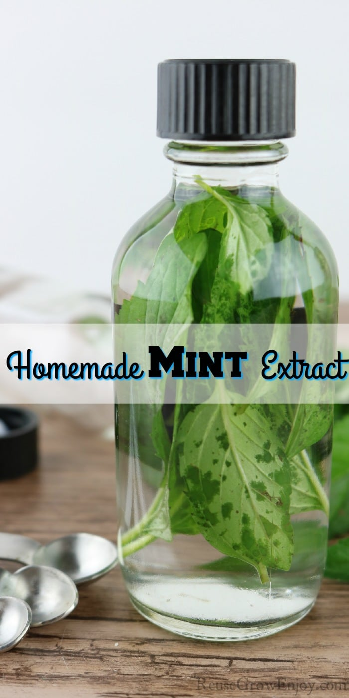 "Glass bottle with floating mint leaves and black top. Text overlay in the middle that says ""Homemade Mint Extract"""