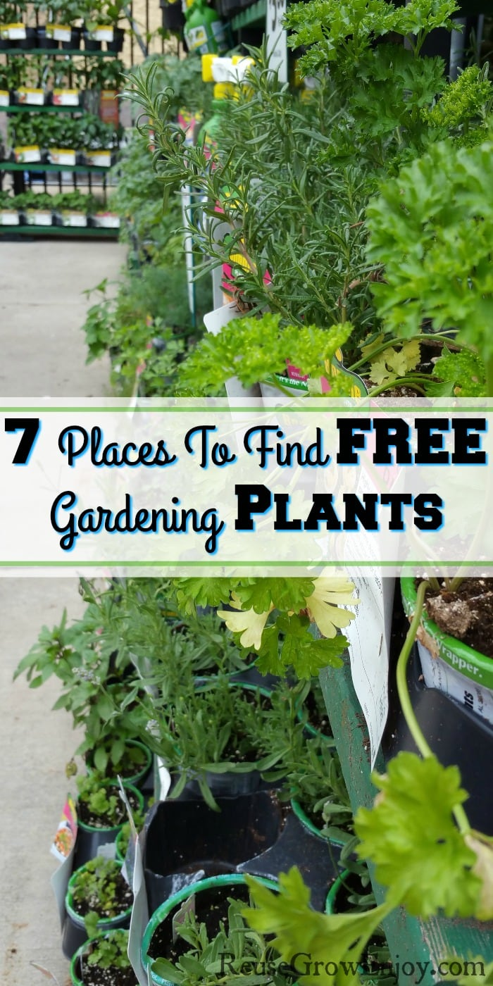 "Gardening plants on shelves at a garden center that are just starting to wilt. Text overlay that says ""7 Places To Find Free Gardening Plants""."