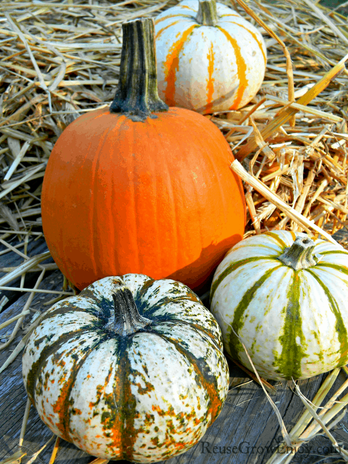 Group of display pumpkins laying on wood and straw