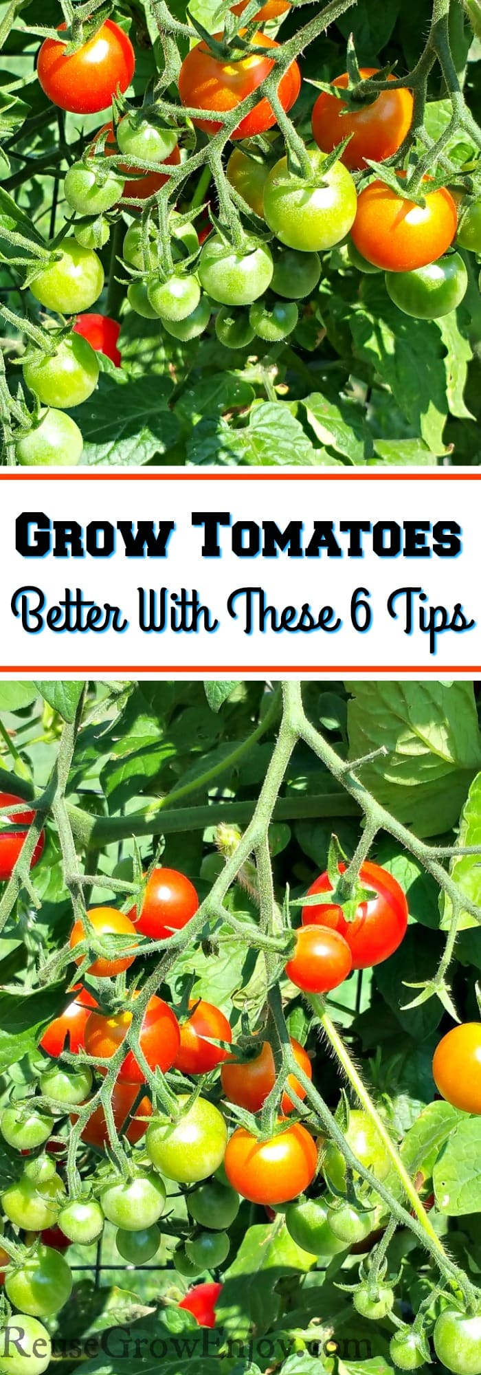 Whether you like small cherry tomatoes or big steak tomatoes, you'll find that you can grow tomatoes in your own garden, to be a very rewarding experience. I am going to show you how to Grow Tomatoes Better With These 6 Tips!