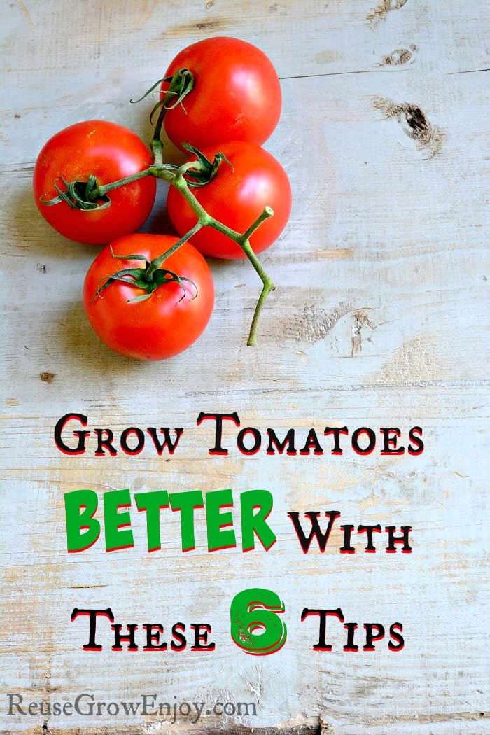 Grow Tomatoes Better With These 6 Tips