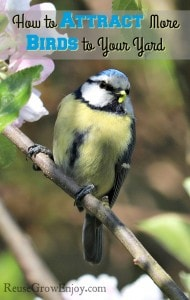 How To Attract Birds To Your Yard This Summer