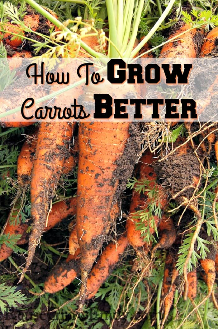 How To Grow Carrots Better