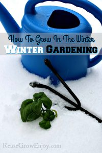 Have you been wondering how to grow in the winter? Check out all of these tips on winter gardening! Love growing all year long!