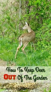 How To Keep Deer Out Of Garden