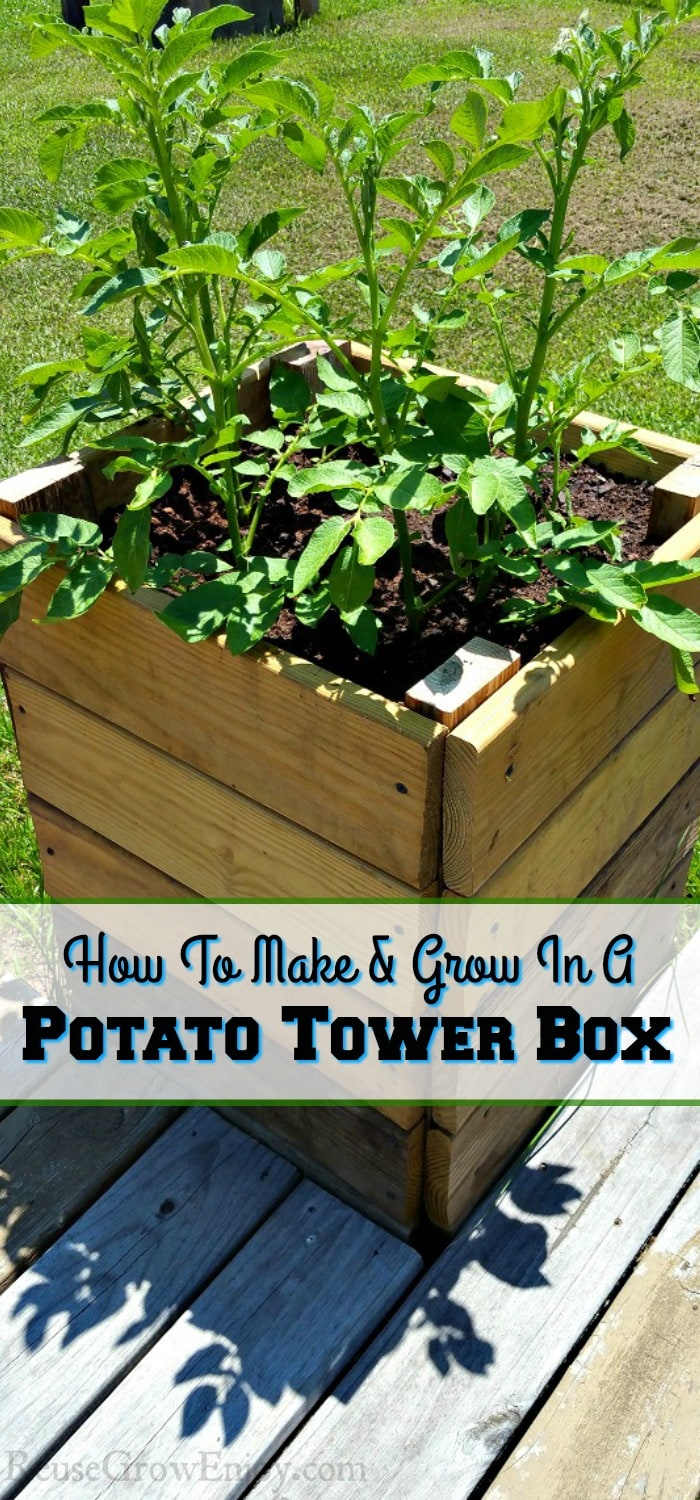 "Potato tower box with text overlay that says ""How To Make & Grow In A Potato Tower Box""."