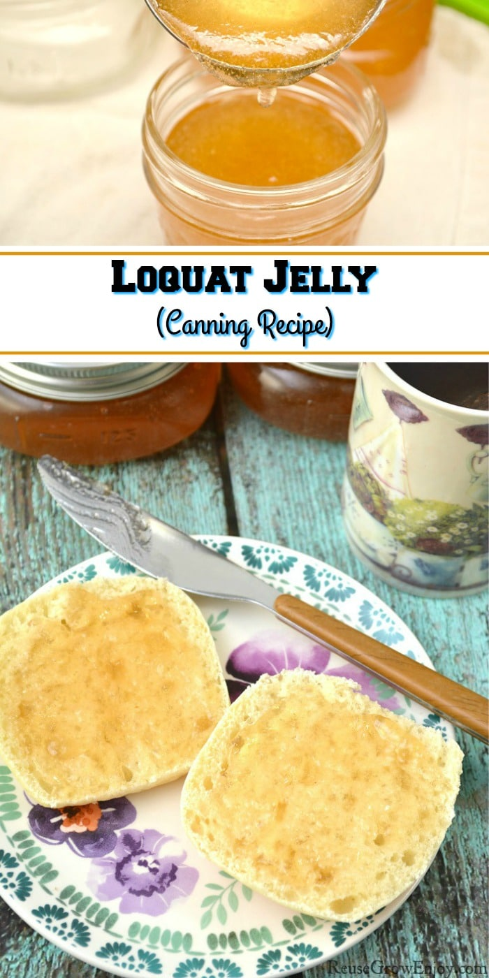 "At the bottom is stacked jars of loquat jelly in the back, cup of coffee to the right side. In the front is biscuit cut in half on a plate with some loquat jelly spread on them with the knife that is laying on the plate. At the top is spoon filling jars with loquat jelly. The middle is a text overlay that says ""Loquat Jelly Canning Recipe""."
