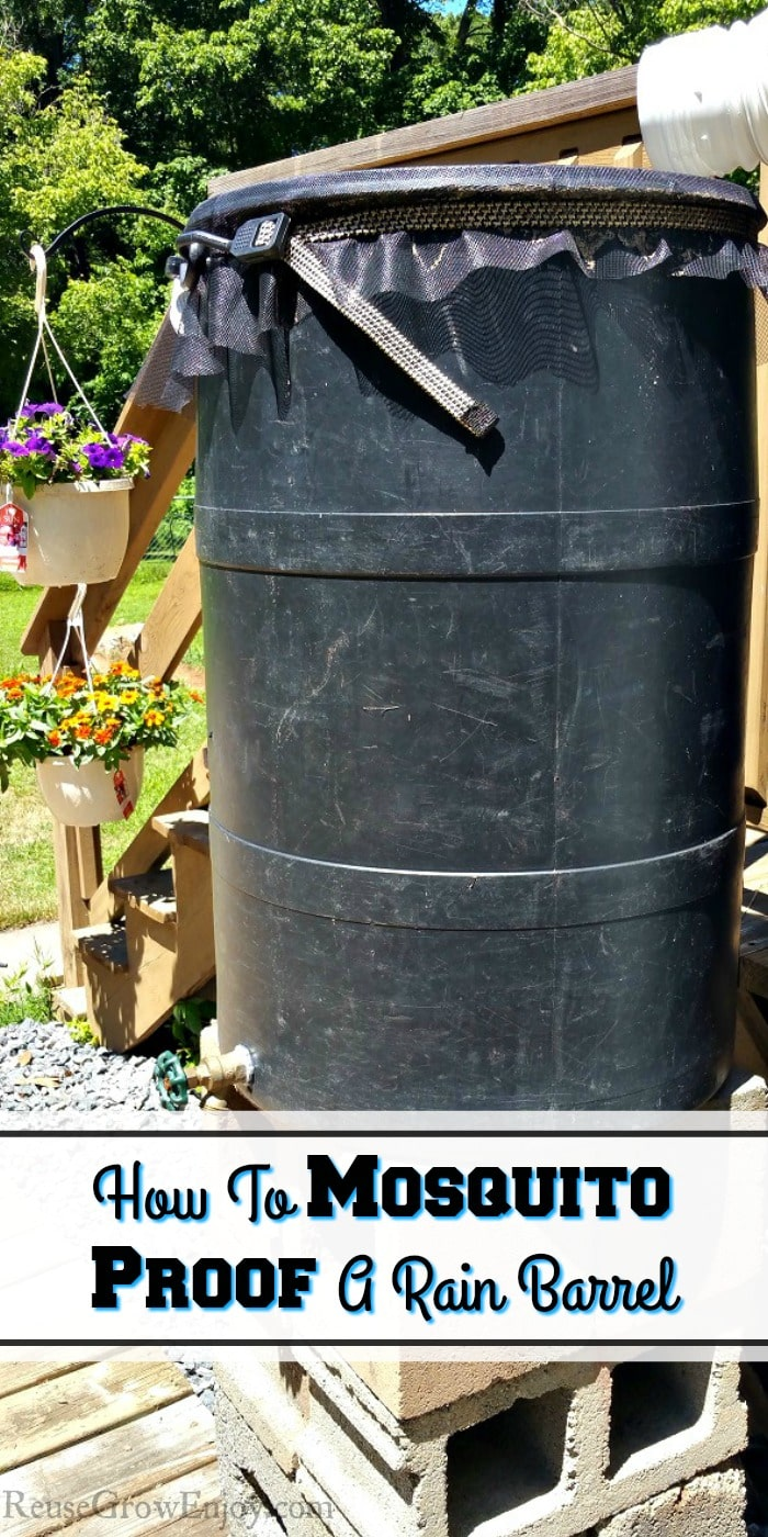 Do you have issues with mosquitoes in your rain barrel? I am going to show you how to mosquito proof a rain barrel! So much cheaper than a new one!