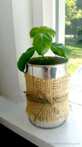 Basil growing in dirt in can wrapped in burlap in window