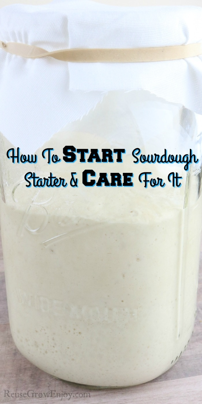 Jar of starter with text overlay that says How To Start Sourdough Starter & Care For It