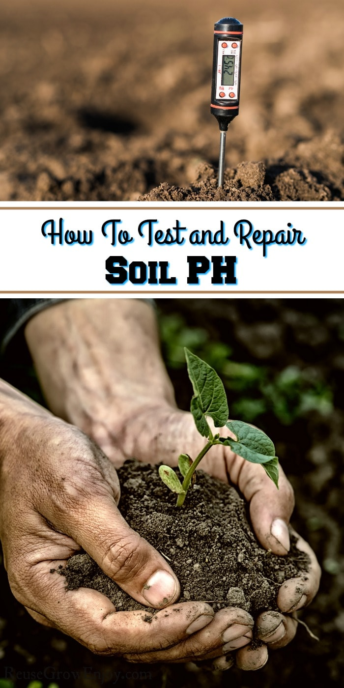 Hands holding soil and small plant at bottom. Top is a meter sticking in the soil. Text overlay in the middle that says How To Test And Repair Soil PH