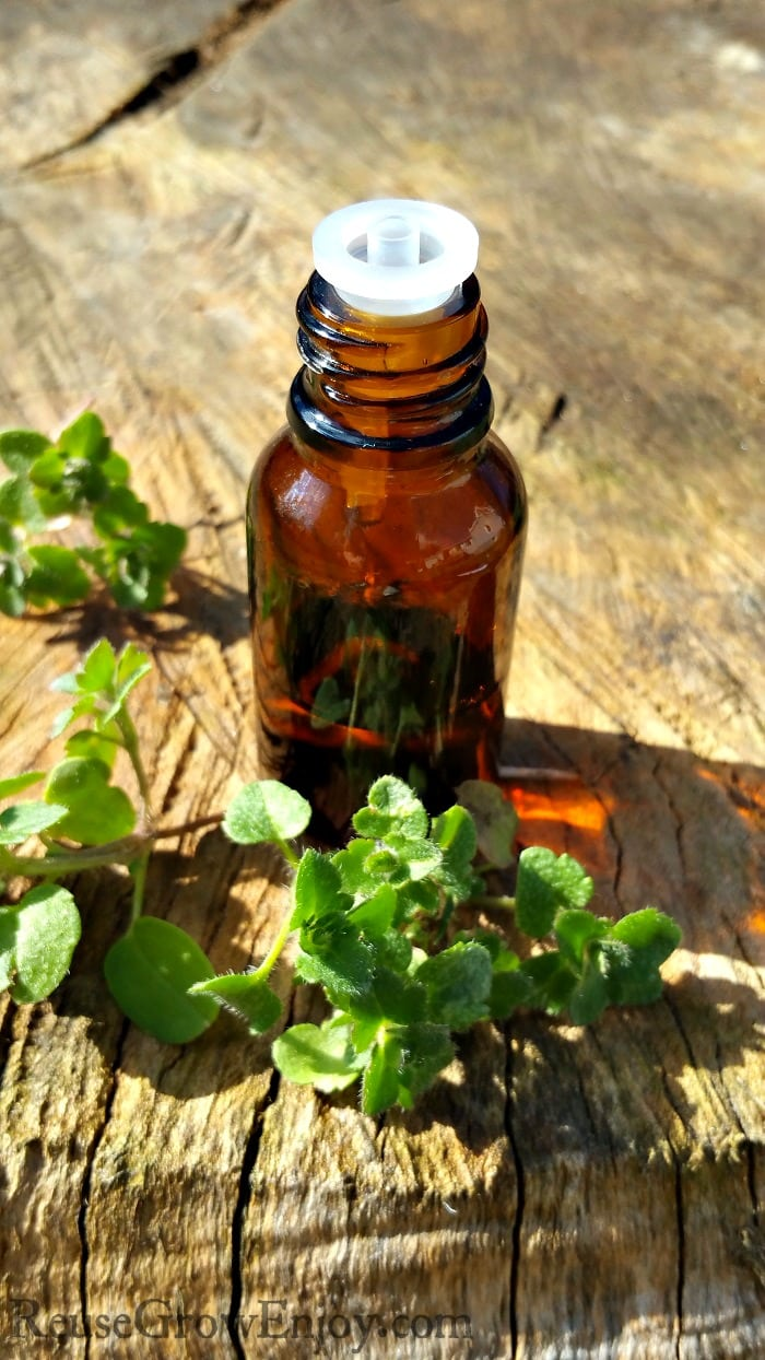 Marjoram essential oil is one oil that has a great variety of benefits and uses and is a truly valuable oil that should be kept on hand. I am going to share a few things with you about the oil and ways it can be used.