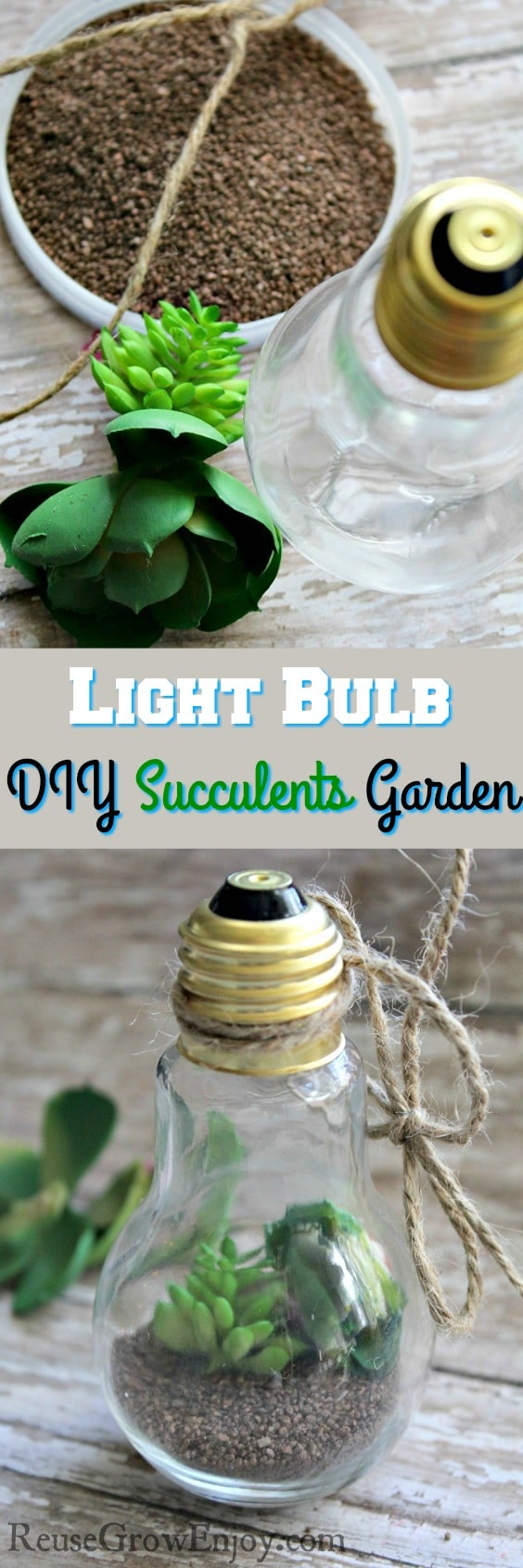 Looking a cute way to add the look of plants to your house? Check out this Mini Light Bulb DIY Succulents Garden!