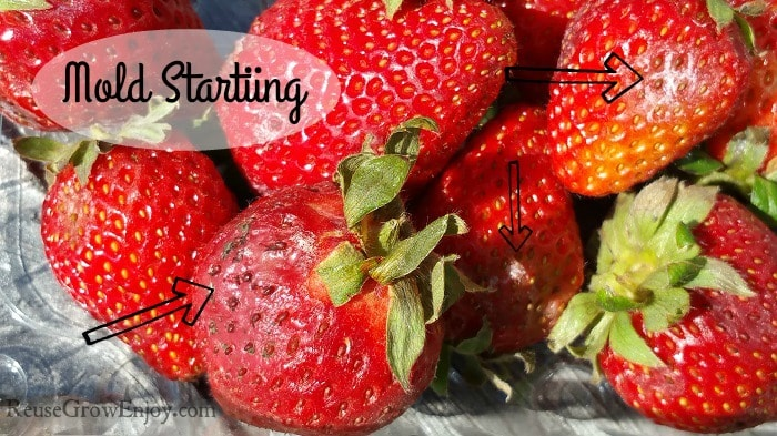 A contener with fresh strawberries with a few of the strawberries starting to mold.