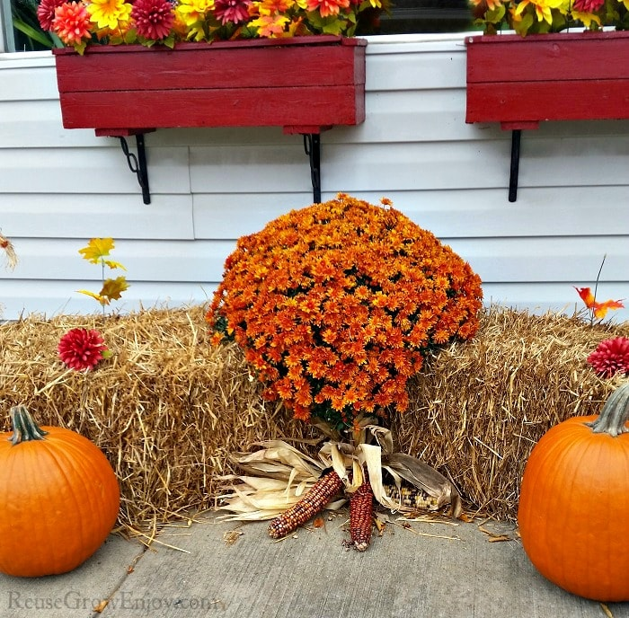 Orange mums on a hay bale with pumpkins in front