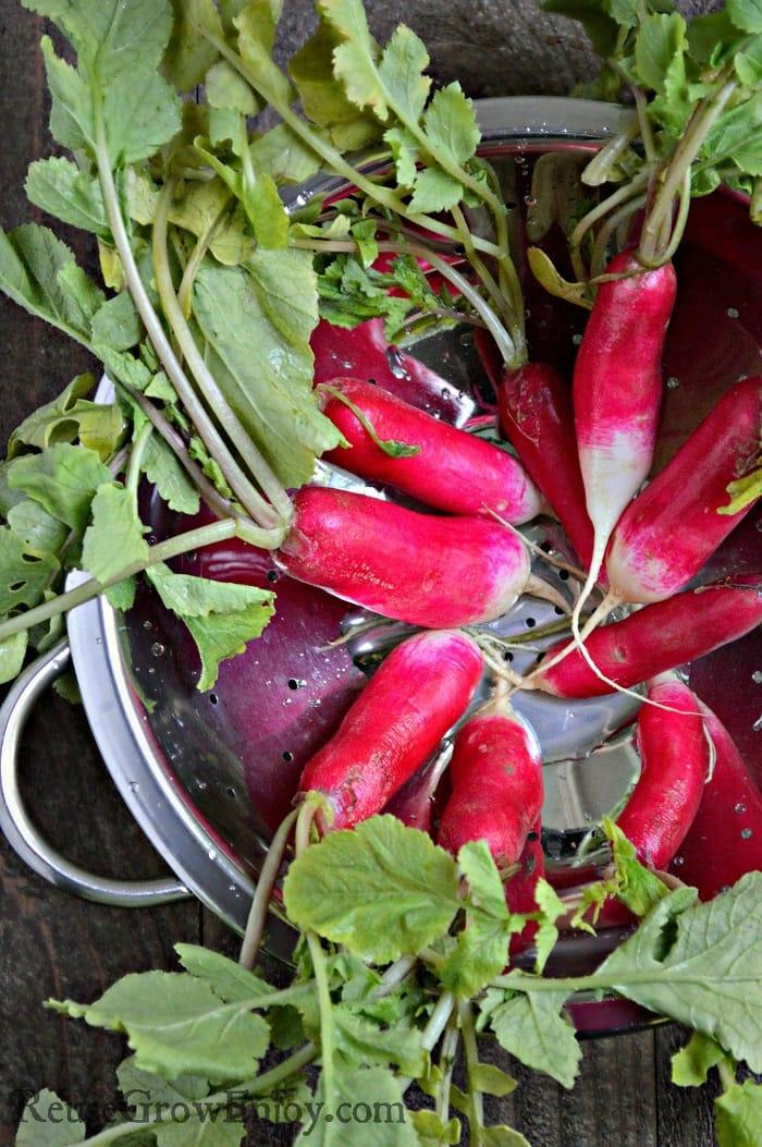 Pickled radishes washed