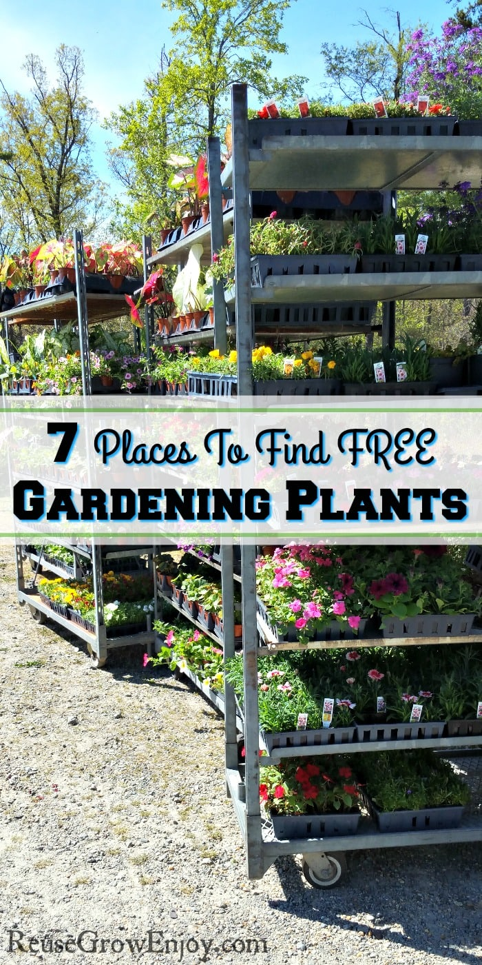 "Rolling racks full of gardening plants. Text overlay that says ""7 Places To Find Free Gardening Plants""."