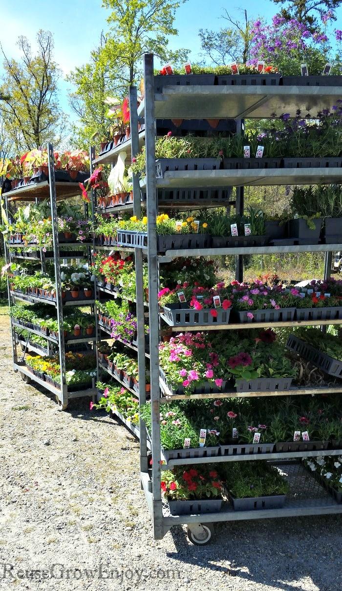 Rolling racks full of gardening plants.