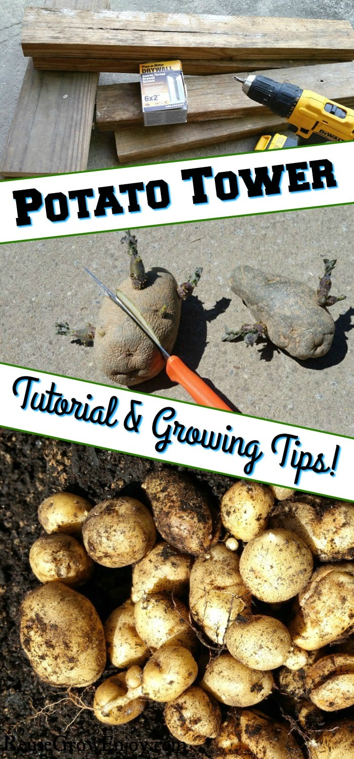 "Boards, Drill and Screws at the top, then potatoes that are sprouting being cut with knife. Then at the bottom is potatoes in dirt. There is a text overlay that says ""Potato Tower Tutorial & Growing Tips""."