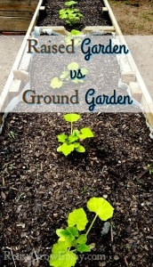 Raised Garden vs Ground Garden