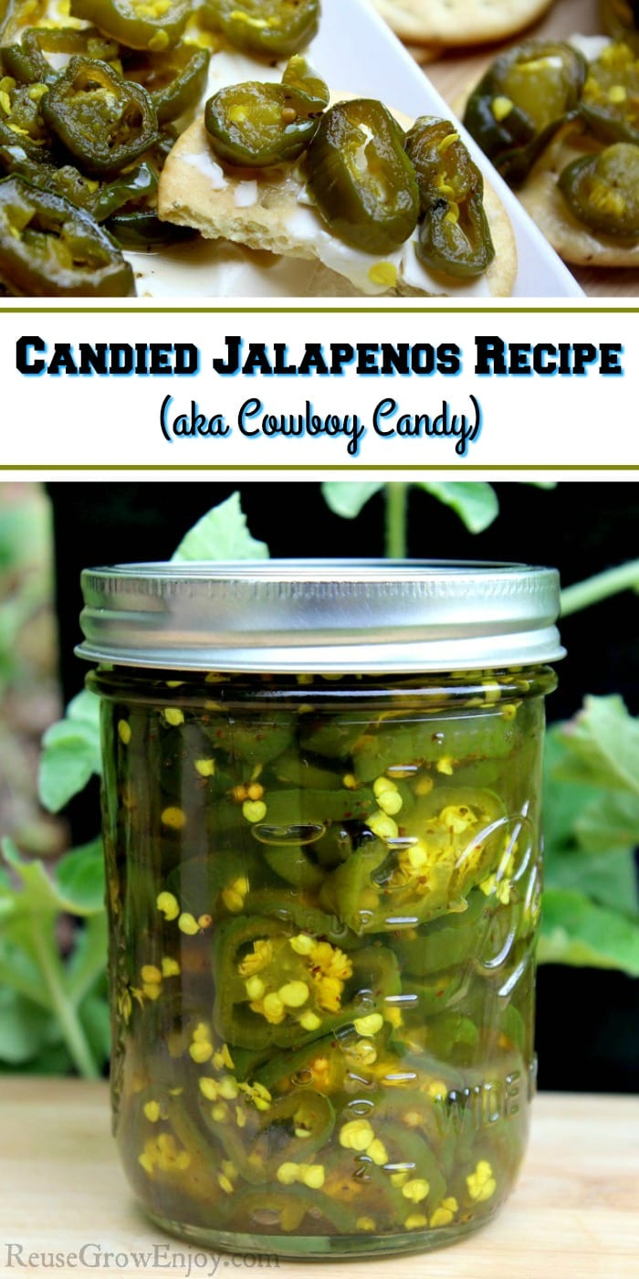 Are you having a good pepper season and find your self with a ton of jalapenos? This is a must try recipe for Candied Jalapenos (aka Cowboy Candy)! This is a canning recipe with a fridge option.
